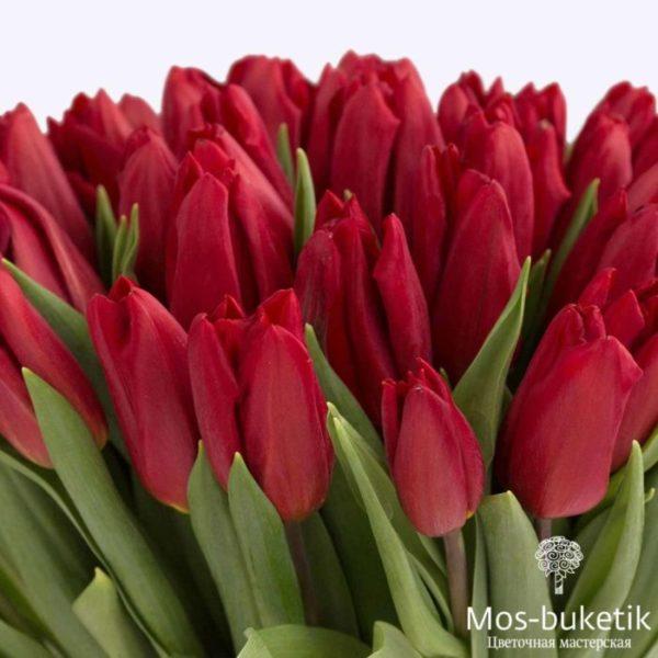 Заказать 51 тюльпанов недорого!