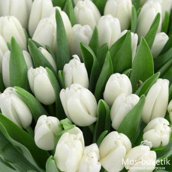 Купить 51 тюльпанов недорого