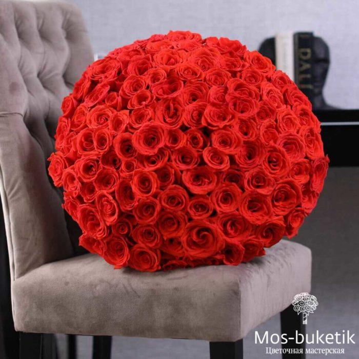 101 Роза Фридом 3821