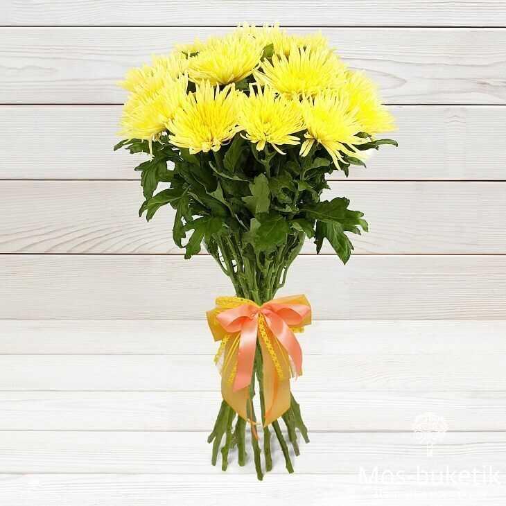 15 одноголовых хризантем в ленте
