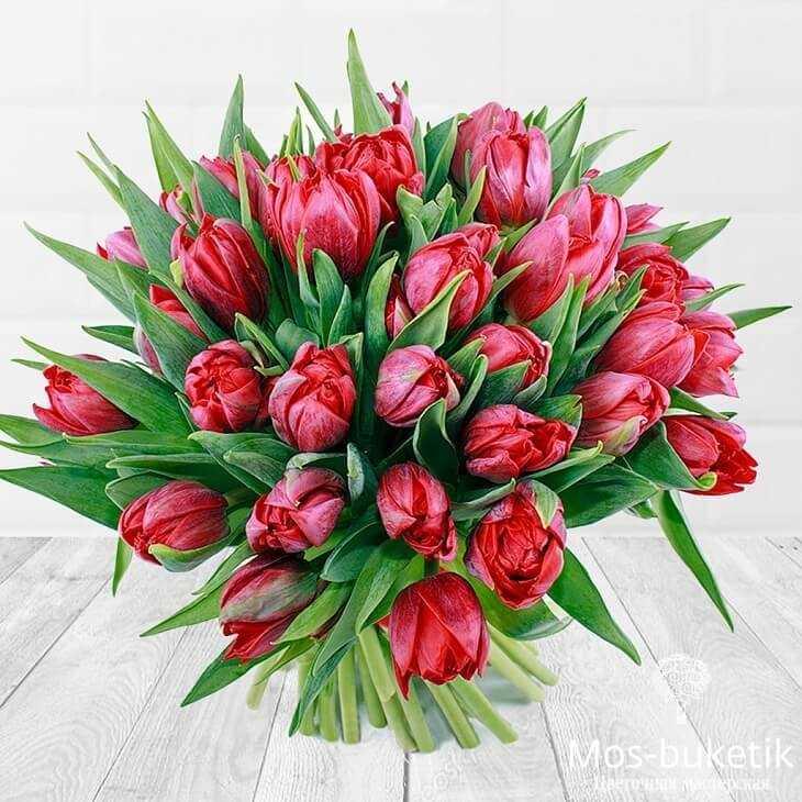 Букет из 51 тюльпанов в ленте 4443