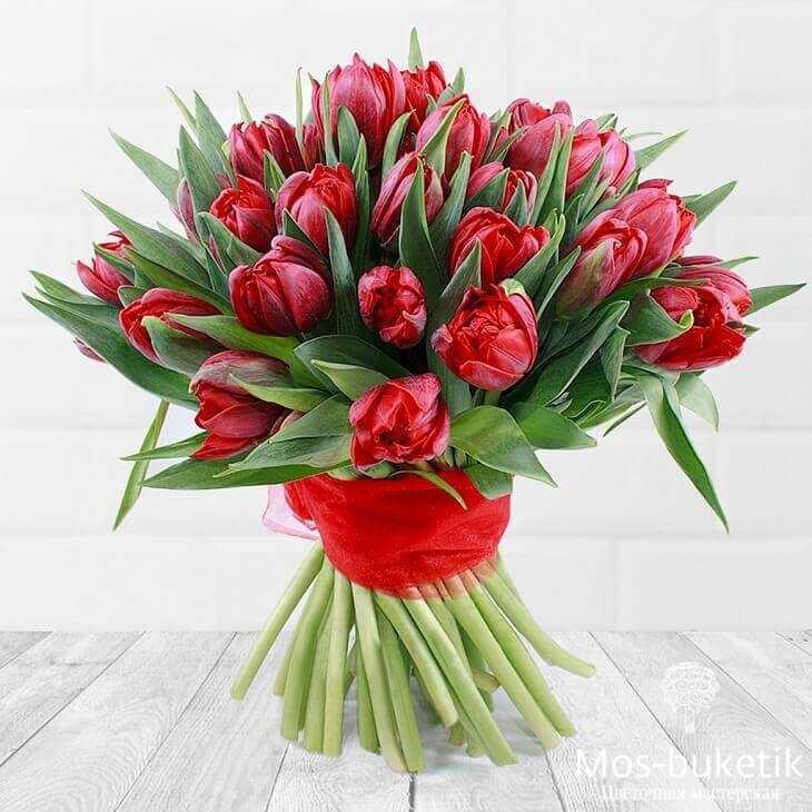 Букет из 51 пионовидных тюльпанов в ленте
