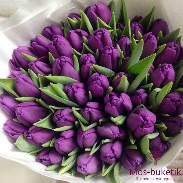 Букет из фиолетовых тюльпанов (51 шт)