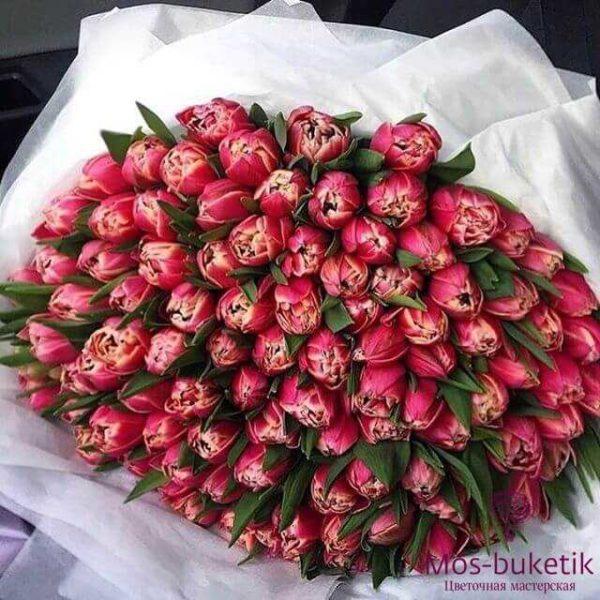 Букет из красных пионовидных тюльпанов (101 шт)