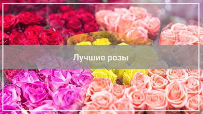 Недорогие розы