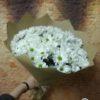 Букет из 15 кустовых хризантем 11706