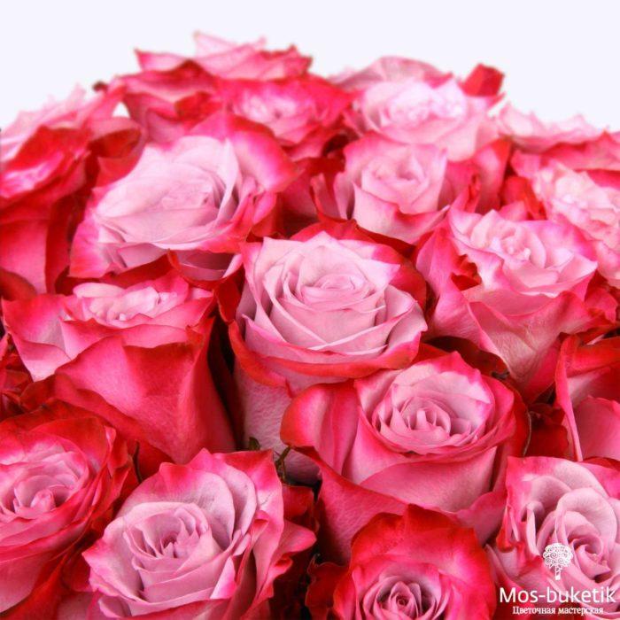 25 эквадорская роза 8022