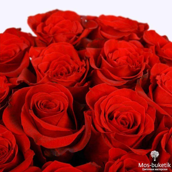 25 эквадорская роза 8016