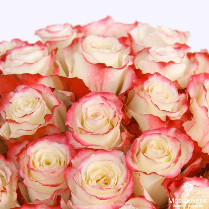 25 эквадорская роза 8009