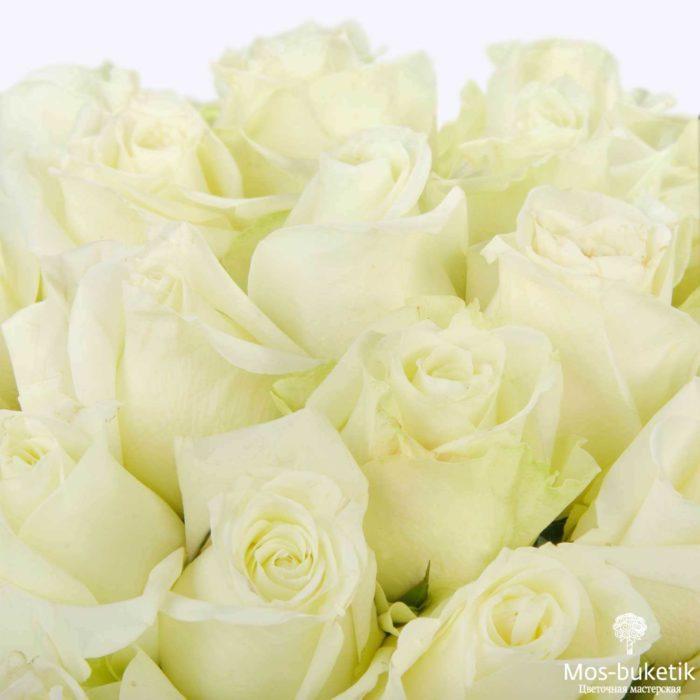 25 эквадорская роза 8006